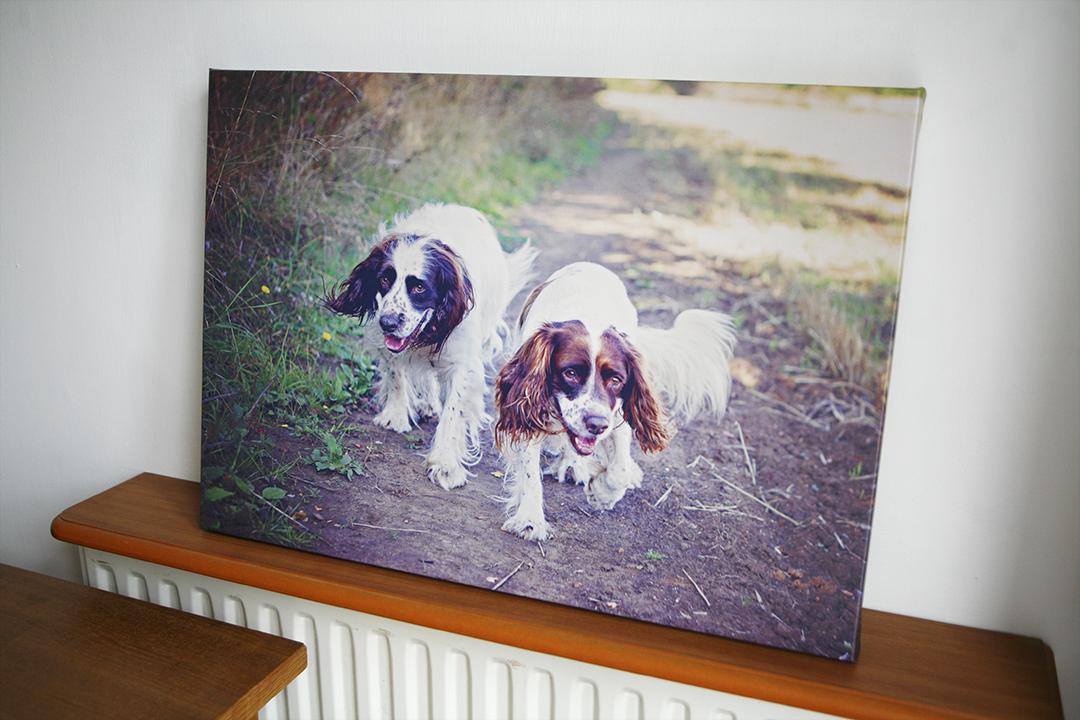 milton-keynes-dog-canvas-4131