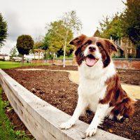 leighton-buzzard-pet-dog-5581