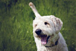 Milton Keynes family and dog photography