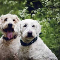 Milton Keynes dog photography
