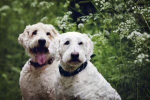Milton Keynes dog photography