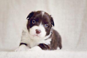 Milton Keynes puppy photography