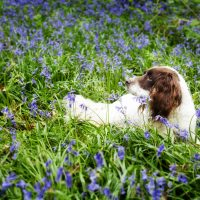 Dog portrait photography outdoors in and around Milton Keynes, Buckingham, and Towcester
