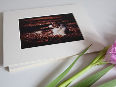 Milton Keynes border collie dog printed photograph