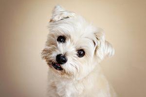 Milton Keynes, Buckingham,Towcester dog photography